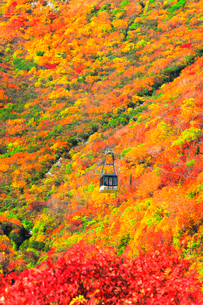秋の立山ロープウェイと紅葉の写真素材 [FYI03432274]
