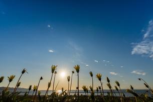 海辺の花の写真素材 [FYI03432370]