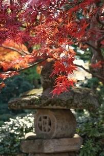 紅葉と石灯籠の写真素材 [FYI03432447]