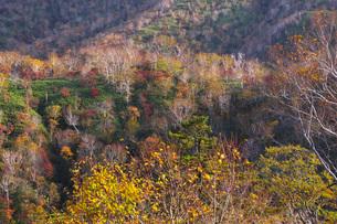 オロフレ峠の紅葉の写真素材 [FYI03432508]