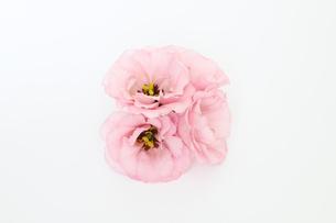 トルコキキョウの花束の写真素材 [FYI03432729]