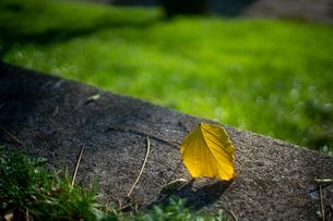 黄色い落ち葉と緑とコンクリートの写真素材 [FYI03433105]