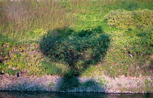 ハートの木シルエット(木の影)の写真素材 [FYI03433129]