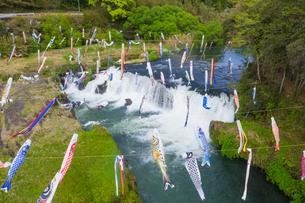 鯉のぼりと湯之尾滝の写真素材 [FYI03433150]