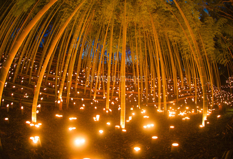 竹林ライトアップ(小机城址市民の森)の写真素材 [FYI03433484]