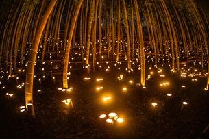 竹林ライトアップ(小机城址市民の森)の写真素材 [FYI03433485]