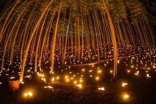 竹林ライトアップ(小机城址市民の森)の写真素材 [FYI03433486]