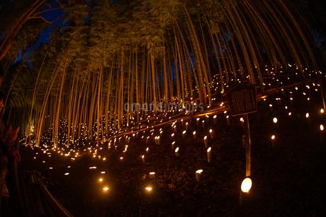 竹林ライトアップ(小机城址市民の森)の写真素材 [FYI03433488]
