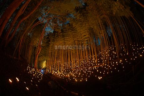 竹林ライトアップ(小机城址市民の森)の写真素材 [FYI03433511]
