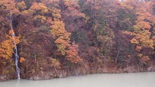 紅葉、白濁した川の写真素材 [FYI03433656]