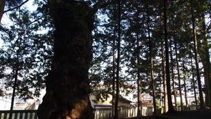 大木の写真素材 [FYI03433763]