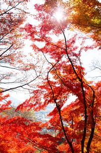 西山公園から望む紅葉と鯖江市街の写真素材 [FYI03434230]