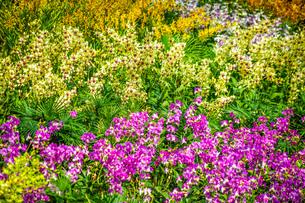 白と黄色の花(デイジー・マーガレット・カモミール)の写真素材 [FYI03434304]
