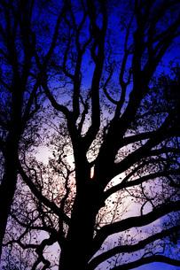 漆黒の木の写真素材 [FYI03434308]