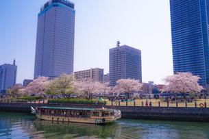 満開の桜と横浜みなとみらいの街並みの写真素材 [FYI03434327]