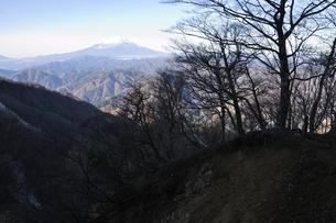 晩秋の朝 檜洞丸より富士山の写真素材 [FYI03434374]