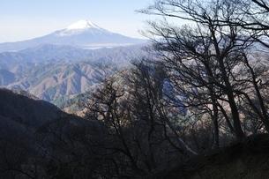 晩秋の朝 檜洞丸より富士山の写真素材 [FYI03434375]