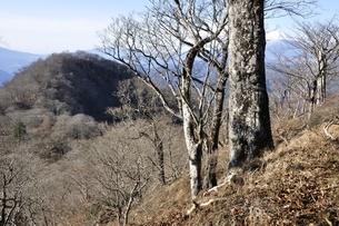 ツツジ新道より望む同角ノ頭と富士山遠望の写真素材 [FYI03434386]