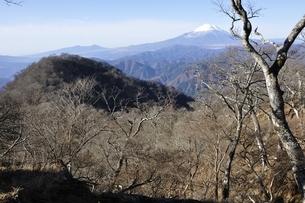 晩秋の檜洞丸より富士山とテシロノ頭の写真素材 [FYI03434389]