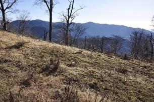 檜洞丸より望む塔ノ岳稜線の写真素材 [FYI03434395]