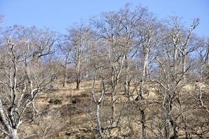 檜洞丸山頂の森の写真素材 [FYI03434398]