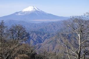 初冬の富士山の写真素材 [FYI03434400]