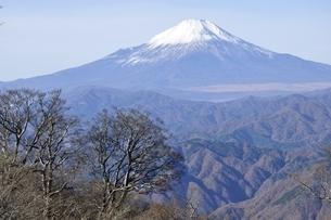 初冬の富士山の写真素材 [FYI03434401]