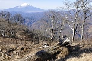 初冬富士山眺望の写真素材 [FYI03434406]