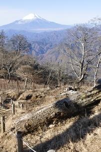 初冬富士山眺望の写真素材 [FYI03434407]