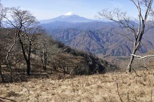 檜洞丸のつつじ新道より富士山の写真素材 [FYI03434457]