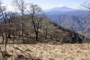 檜洞丸のつつじ新道より富士山の写真素材 [FYI03434458]