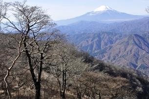 檜洞丸より初冬の富士山眺望の写真素材 [FYI03434459]