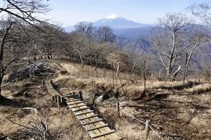富士山につつじ新道の木道の写真素材 [FYI03434461]