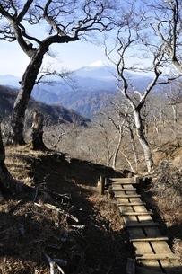 つつじ新道の森から眺める富士山の写真素材 [FYI03434467]