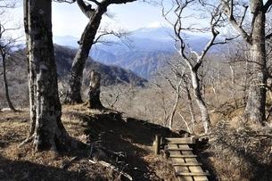 つつじ新道の森から眺める富士山の写真素材 [FYI03434468]