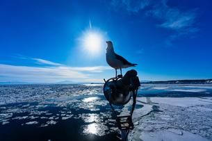 流氷とウミネコの写真素材 [FYI03434572]
