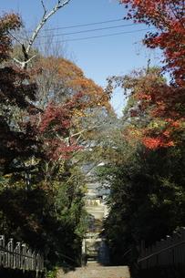丹生官省符神社の石段の写真素材 [FYI03434725]