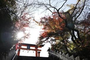 丹生官省符神社 鳥居の写真素材 [FYI03434727]