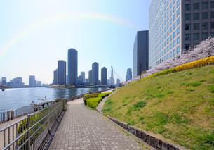 桜の咲く隅田川護岸と大川端リバーシティ21の写真素材 [FYI03434783]