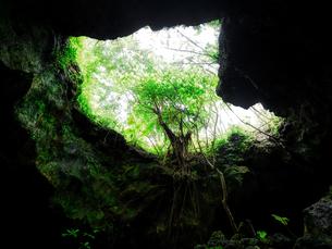 石垣島のジャングルの写真素材 [FYI03434886]