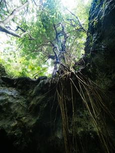 石垣島のジャングルの写真素材 [FYI03434887]