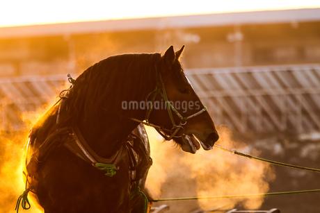 冬の競馬の写真素材 [FYI03434890]