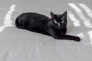 かわいい猫の写真素材 [FYI03434954]