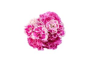 カーネーションの花束の写真素材 [FYI03435055]