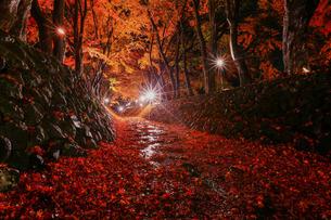 もみじ回廊のライトアップ 落葉 富士河口湖町の写真素材 [FYI03435070]