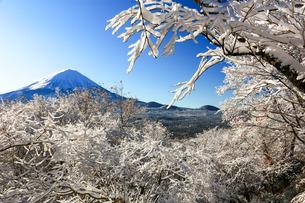 樹氷と富士山 鳴沢村 紅葉台の写真素材 [FYI03435072]