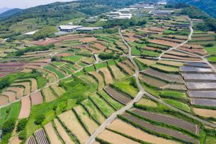 長島町のジャガイモ段々畑の写真素材 [FYI03435290]