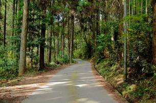 山道への道のりの写真素材 [FYI03435300]