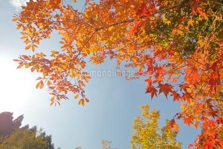 紅葉の秋の写真素材 [FYI03435321]