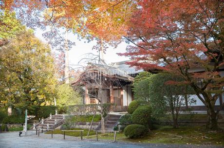 清水寺成就院と紅葉の写真素材 [FYI03435330]